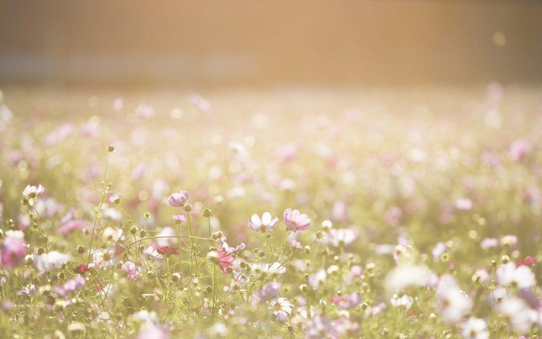 5 redenen om een professioneel tuinbedrijf in te huren